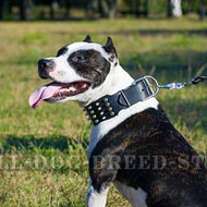 """Biker Style"" Extra Wide Dog Collar for Pitbull Walks"