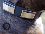 Fancy Dog Collar | Leather Dog Collar for Stafford Bull Terrier