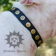 Customized Dog Collar with Round Studs for Bull Terrier