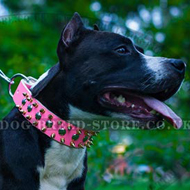 ◭ Female Dog Collar of Head-spinning Design ◮