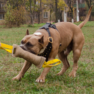 Jute Bite Tug for Grown-Up Amstaff