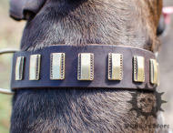 Funky Dog Collar with Brass Plates | Dog Accessories UK