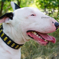 Gorgeous Dog Collar for Bull Terrier, Wide Leather, Brass Plates