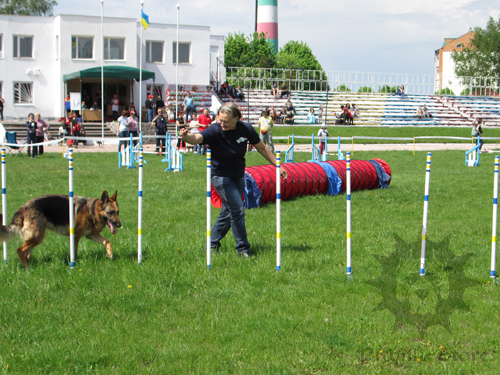 Various Agility Obstacles