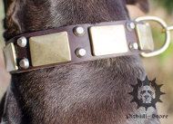 Handmade Dog Collar | Wide Dog Collar with Brass Decoration