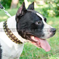 Handmade Leather Dog Collar with Brass Studs for