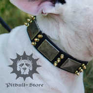 Cool Dog Collar Leather with Spikes & Plates for Bull Terrier