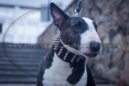 Spiny 3 Inch Dog Collar for Bull Terrier Walks - Click Image to Close