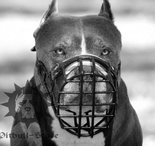 Wire Muzzle Rubber Covered for Pitbull, Ideal for Winter - Click Image to Close