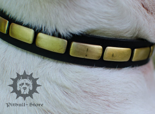 English Bull Terrier Collar UK