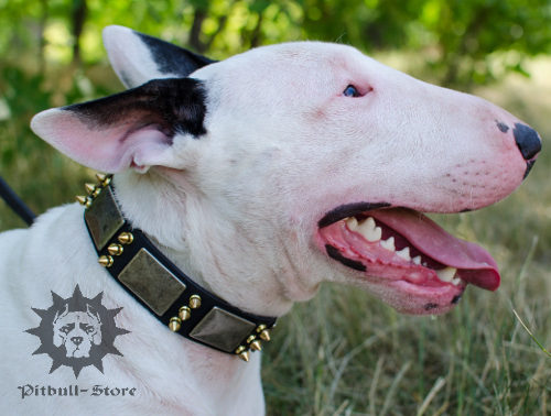 Dog Collar for English Bull Terrier