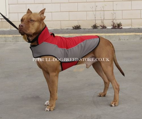 how to keep pit bulls warm in winter