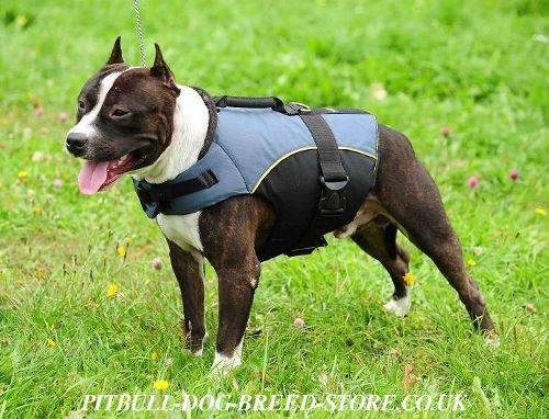 Dog Harness Vest of Nylon for Staffy Rehabilitation and Warming