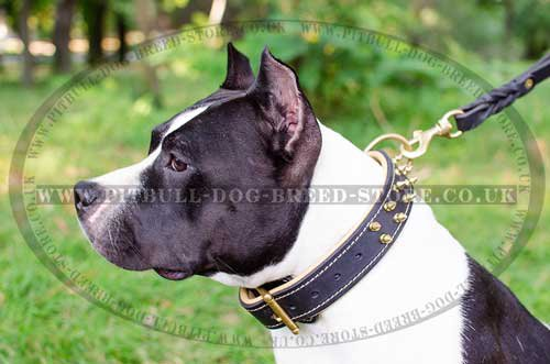 Amstaff Dog Collar UK