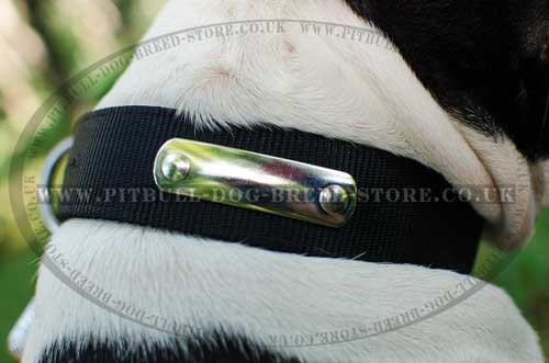 Amstaff Dog Collar Name Plate