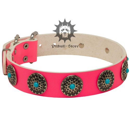 Pink Dog Collar with Blue Stones for Staffordshire Walking