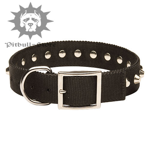Buckled Nylon Dog Collar