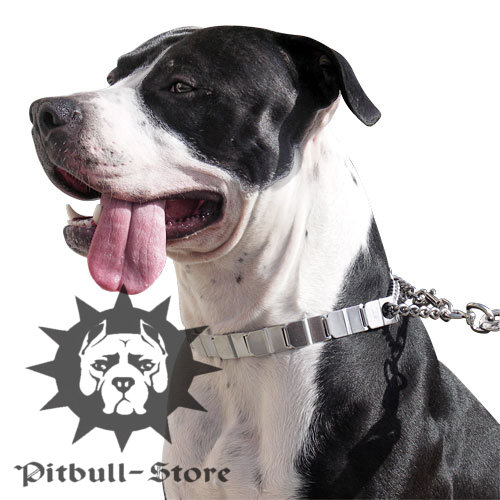 Best Prong Collar for Pitbulls