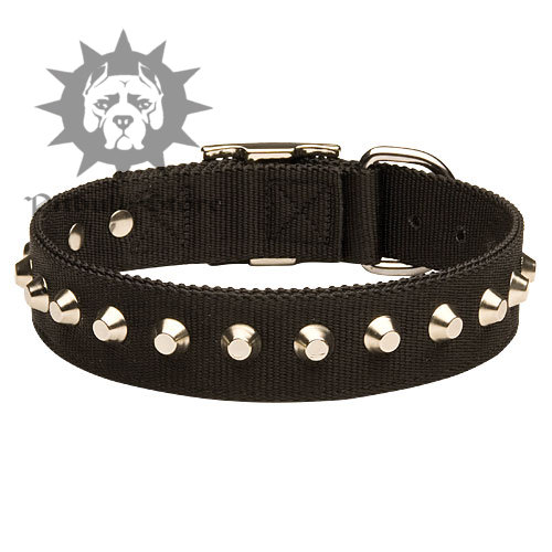 Studded Wide Dog Collar
