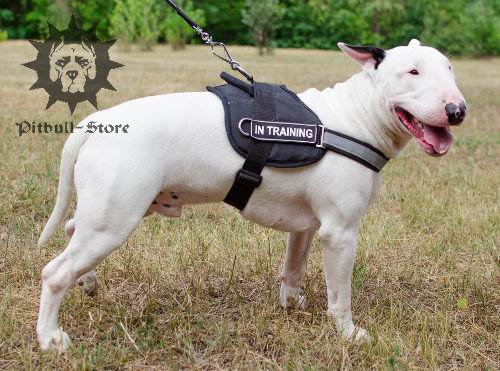 Reflective dog harness for Bull Terrier walking