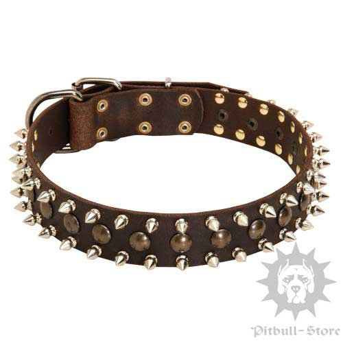 Spiked Dog Collar of Exclusive Design for Staffordshire Terrier