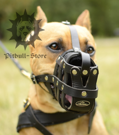 Staffy Leather Muzzle