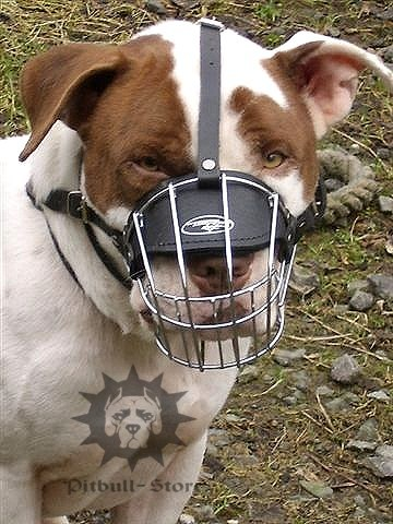 wire basket muzzle for staffy