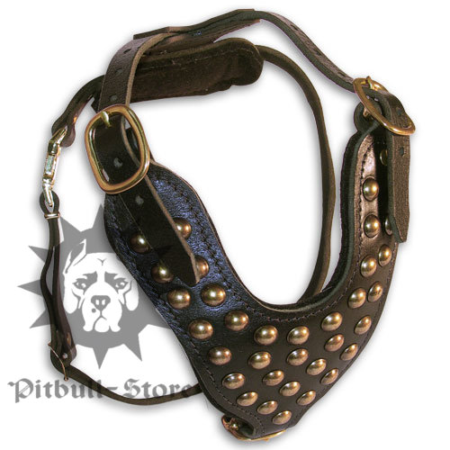 Leather Dog Harness for English Bull Terrier
