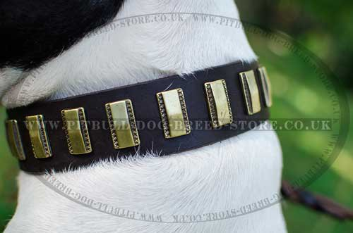 Durable Trendy Dog Collar