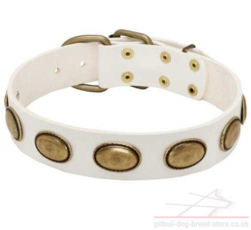 Dog Fashion Collar of White Leather for Staffy