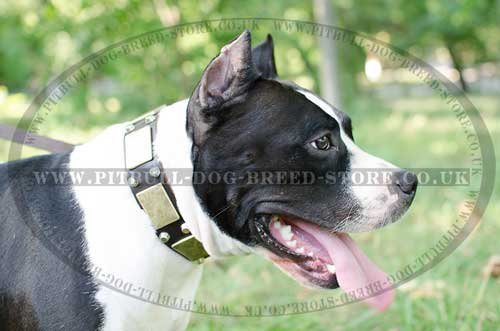 Exclusive Wide Dog Collar