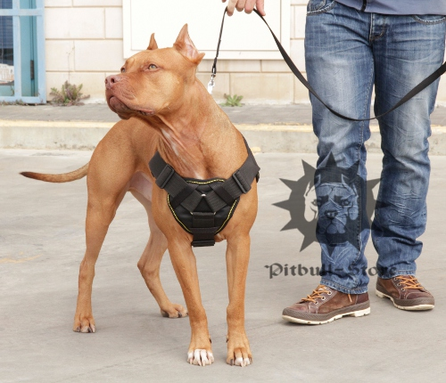 Dog Training Harness of Nylon with Handle and Soft Padding