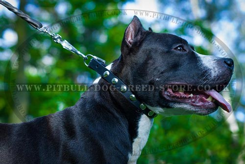Smart Amstaff Collar with Silver Moons Around - Click Image to Close