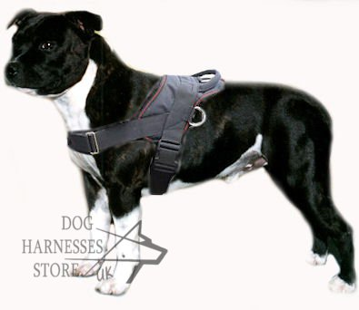 Staffordshire Bull Terrier Nylon Harness for Tracking, Pulling