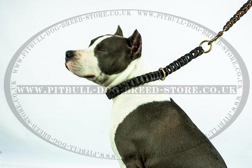 Super Trendy Braided Leather Dog Collar for Amstaff