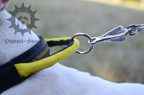 Nylon Dog Collar with Handle for English Bull Terrier