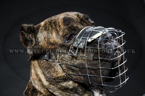 Cane Corso Basket Muzzle of Wire for Walks and Training