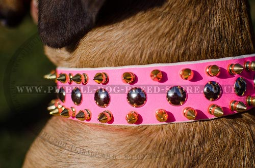 Cane Corso Collar Female of Studded and Spiked Pink Leather