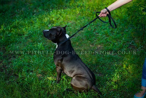 Genuine Leather Dog Collar and Lead in 1