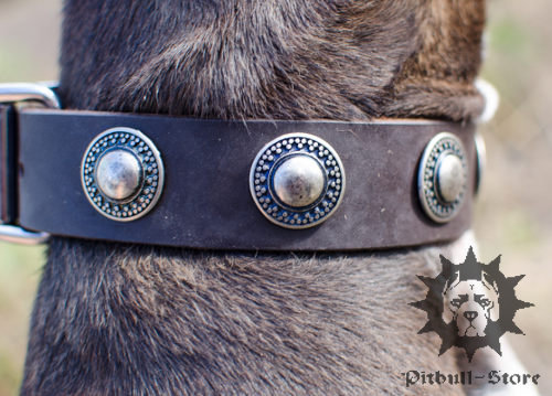 Designer Leather Dog Collar for Staffy with Round Decor