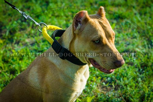 Nylon Quick Release Collar with Handle for Pitbull