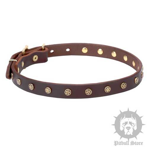 Dog Collar with Stars, Narrow Real Leather Strap, Brass Hardware