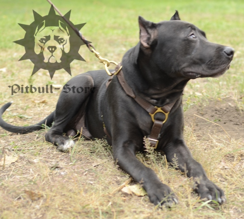Pit Bull Handcrafted Luxury Leather Large Harness, UK
