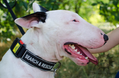 Nylon Dog Collar with Patches & Buckle for Bull Terrier Training