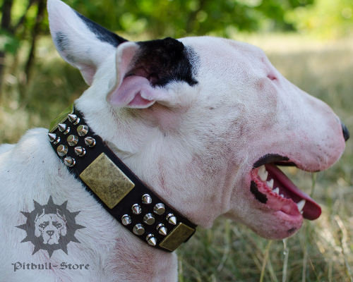 Bull Terrier Collar with Spikes, Pyramids and Plates, Exclusive