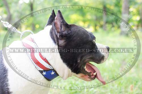 Handmade Dog Collar of USA Style for Amstaff, Unique Design