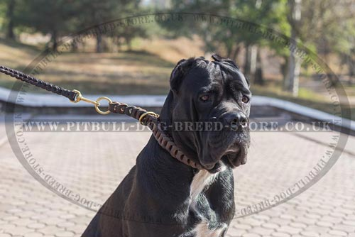 Leather Braided Dog Collar of Choke Design, Quick-release Buckle