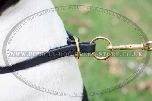 Leather Choke Dog Collar for Amstaff Obedience