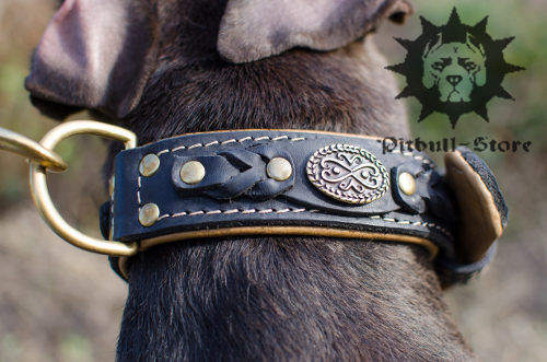 Bestseller! Luxury Dog Collar Nappa Padded and Decorated