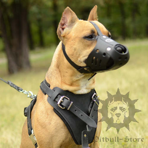 Leather Dog Muzzle for Daily Usage, Pitbull Comfort and Safety - Click Image to Close